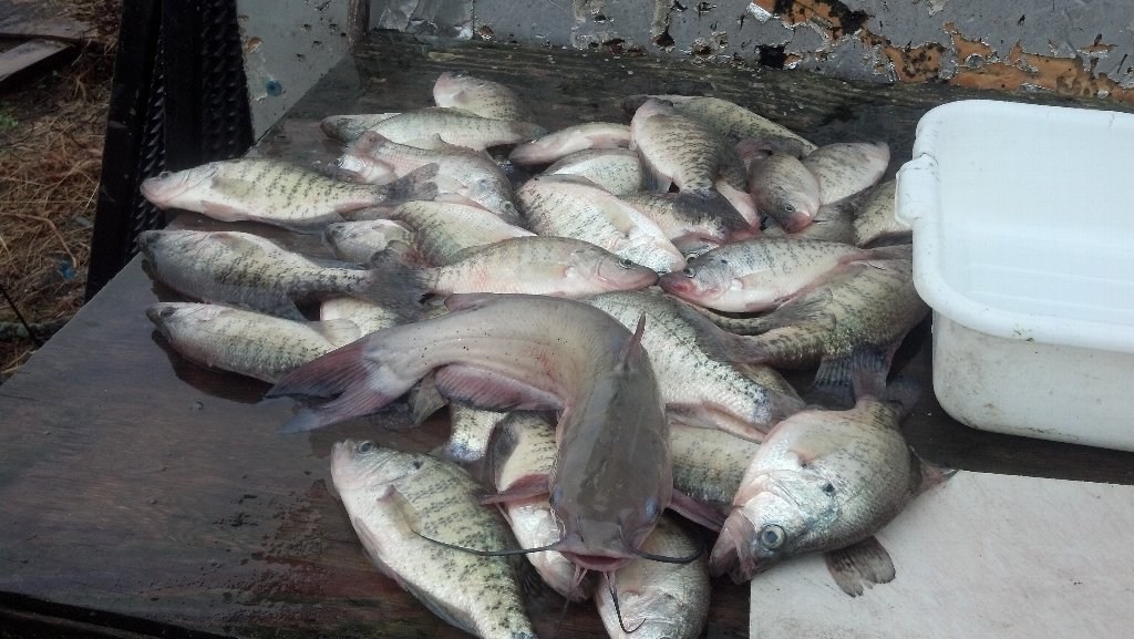 Rend lake fishing report best southern illinois current for Rend lake fishing