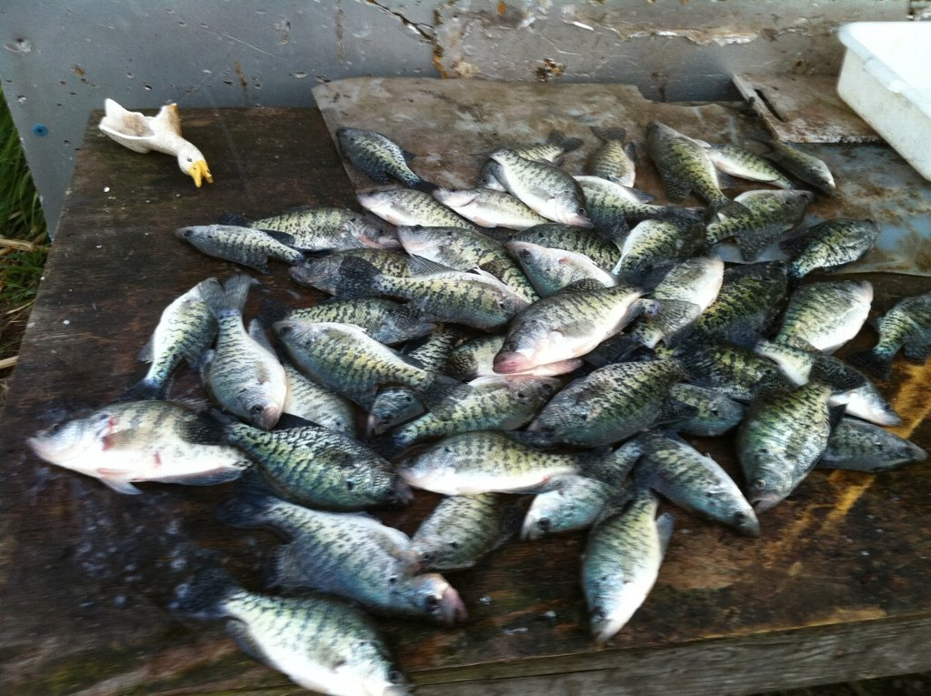 Reports rend lake fishing report best southern for Rend lake fishing